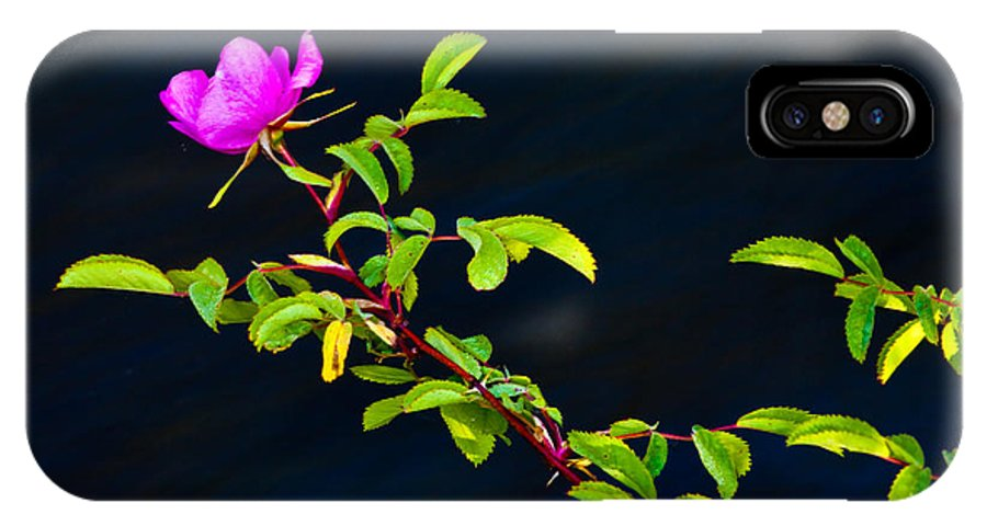 Rose IPhone X Case featuring the photograph Wild Rose by Jim Young