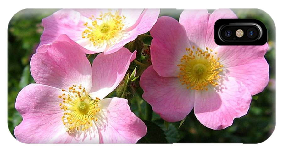 Wild Roses IPhone X Case featuring the photograph Wild Roses 1 by Will Borden