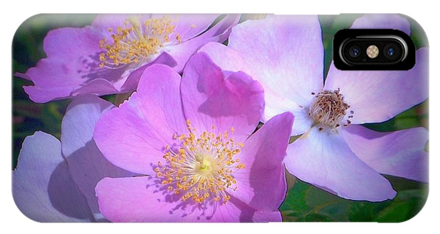 IPhone X Case featuring the photograph Wild Roses by Shirley Moravec