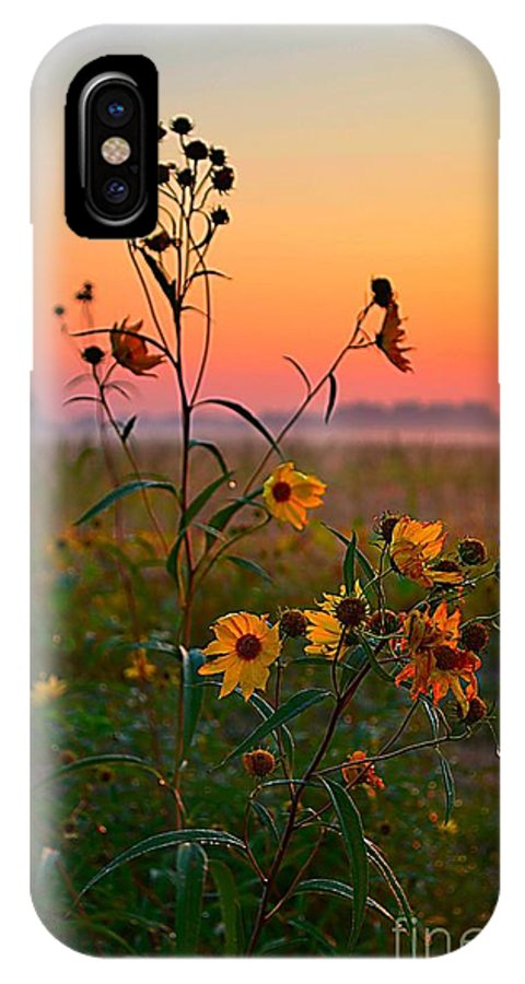 Wild Sunflowers IPhone X / XS Case featuring the photograph Wild Sunflowers At Dawn by Julie Dant