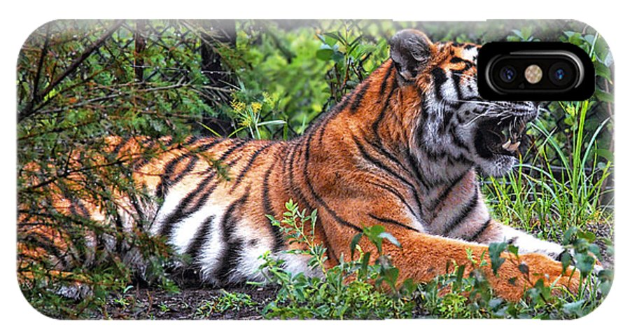Tiger IPhone X Case featuring the photograph Wild Tiger by Mary Almond