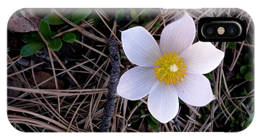 Colorado IPhone X Case featuring the photograph Wildflower Among Pine Needles by Marilyn Burton