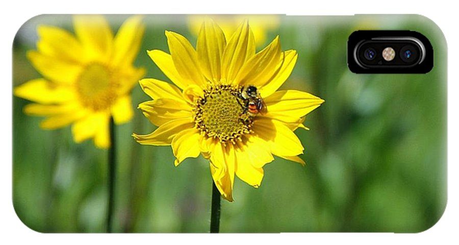 Colorado IPhone X Case featuring the photograph Wildflower Bee by Danielle Marie