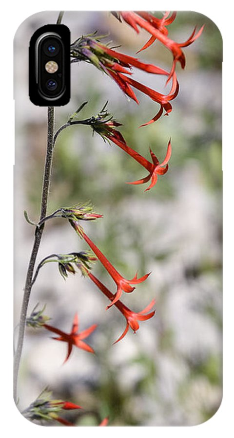 Flowers IPhone X Case featuring the photograph Wildflower by Carl Nielsen