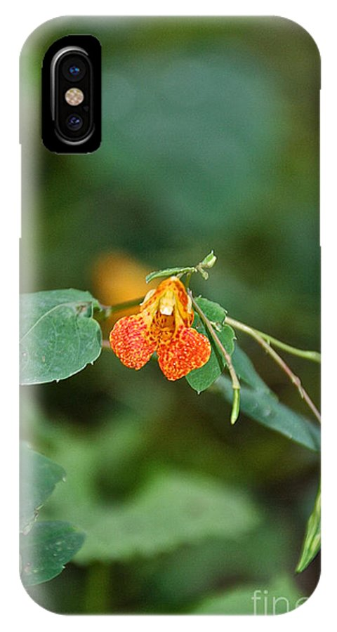 Flower IPhone X Case featuring the photograph Wildly Orange by Susan Herber