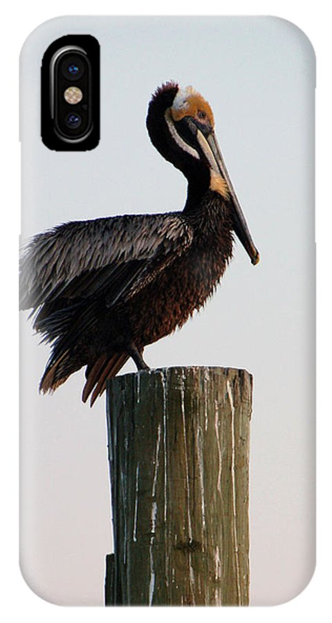 Brown Pelican IPhone Case featuring the photograph Will This Pose Do by Suzanne Gaff