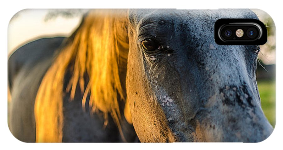 Horse IPhone X Case featuring the photograph Will You Be Back Tomorrow by David Morefield