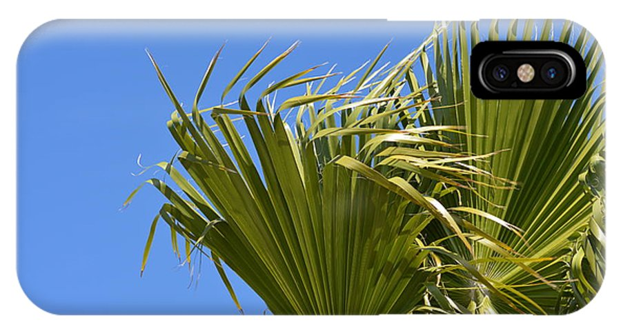 Palm IPhone X Case featuring the photograph Wind In The Palm by Linda Kerkau