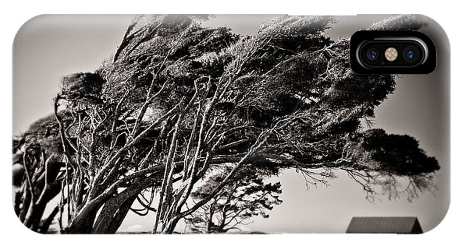 Windswept Trees IPhone X Case featuring the photograph Windswept by Dave Bowman