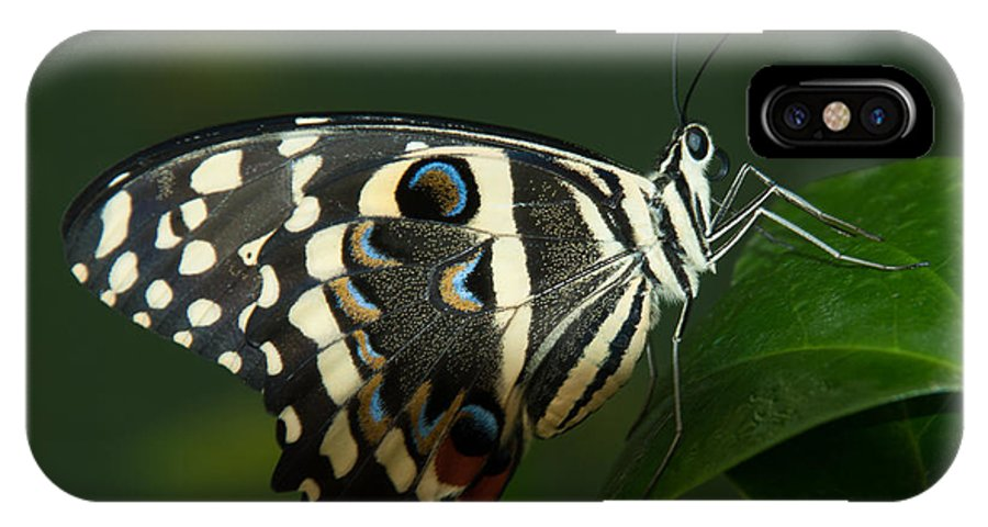Butterfly IPhone X Case featuring the photograph Winged Beauty by Tam Ryan