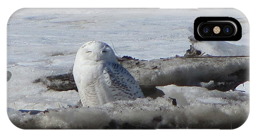 Snowy Owl IPhone X / XS Case featuring the photograph Winking Beauty by Deborah Flusberg