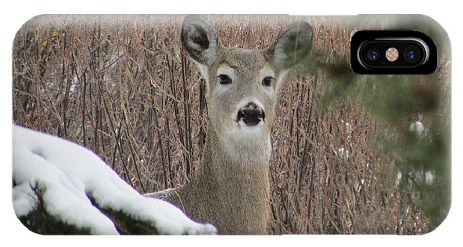 Deer IPhone X / XS Case featuring the photograph Winter Afternoon by Jolene Hintz