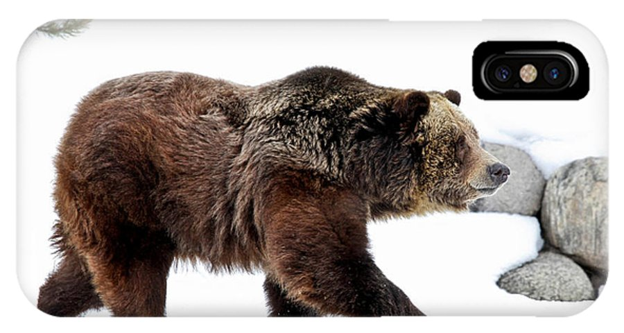 Grizzly IPhone X Case featuring the photograph Winter Bear Walk by Athena Mckinzie