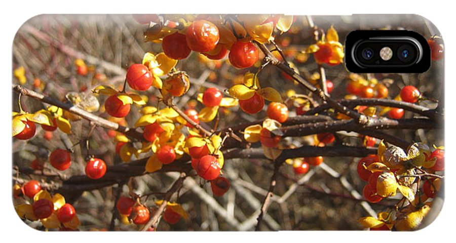 Winter IPhone X Case featuring the photograph Winter Berries by Ara Wilnas