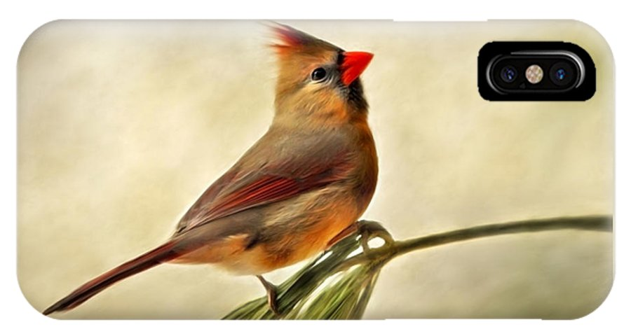 Winter IPhone X Case featuring the mixed media Winter Cardinal by Christina Rollo