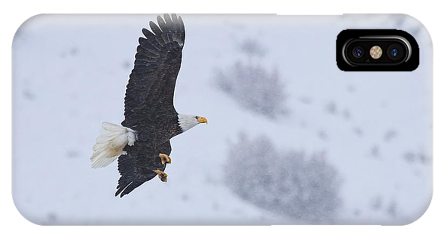 American Bald Eagle IPhone X Case featuring the photograph Winter Flight by Mike Dawson