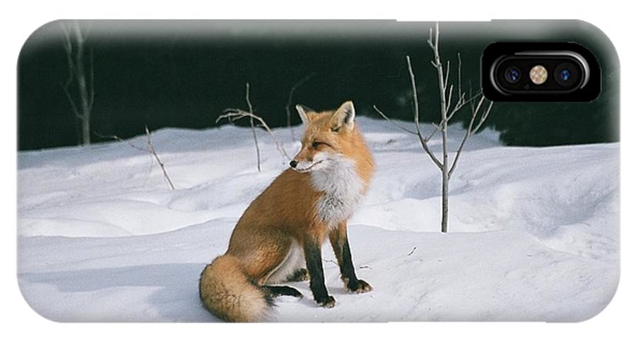 Wildlife IPhone X / XS Case featuring the photograph Winter Fox by David Porteus