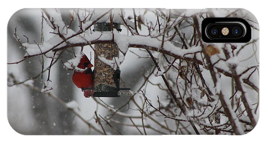 Cardinal IPhone X Case featuring the photograph Winter by Karla Corbin