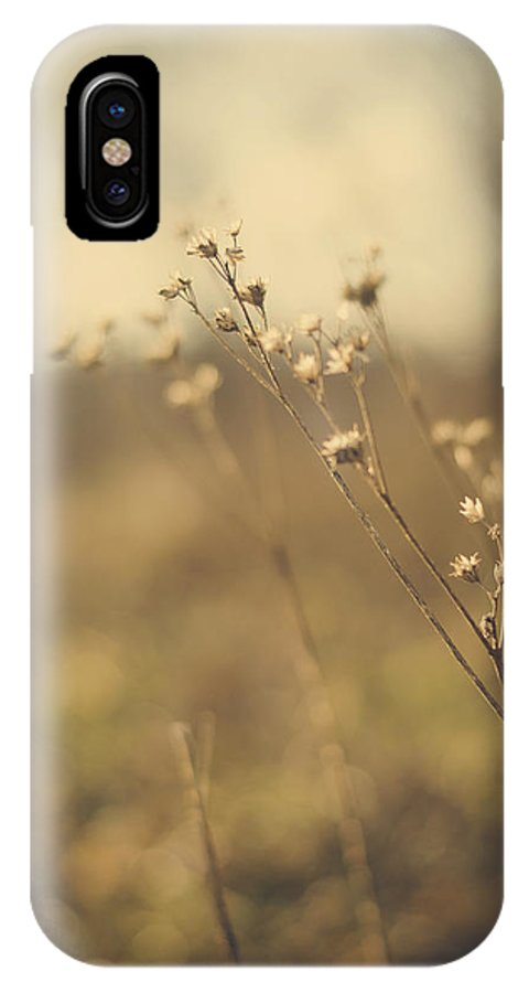 Stalk IPhone X Case featuring the photograph Winter Leftover by Heather Applegate