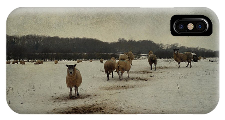Sheep IPhone X Case featuring the photograph Winter Sheep by Sarah Couzens
