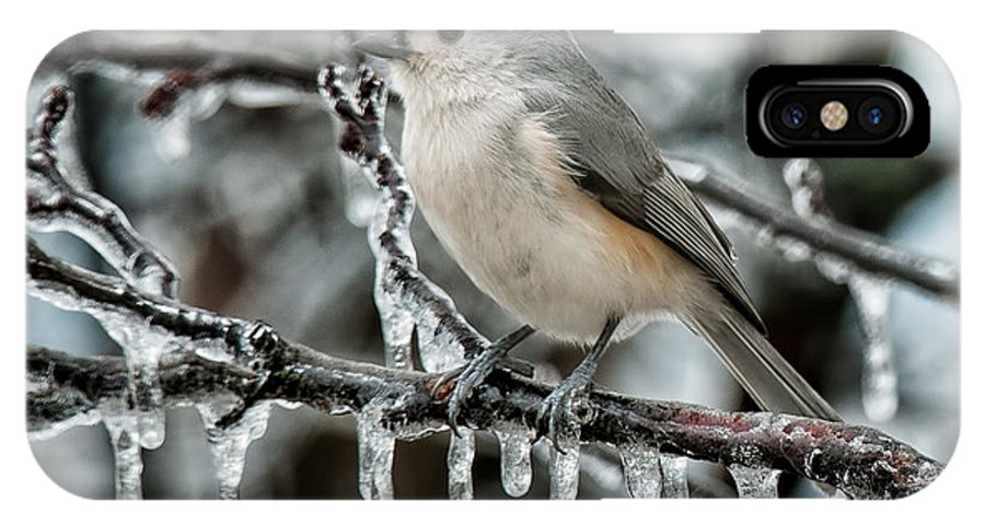 Tufted Titmouse IPhone X Case featuring the photograph Winter Titmouse by Lara Ellis