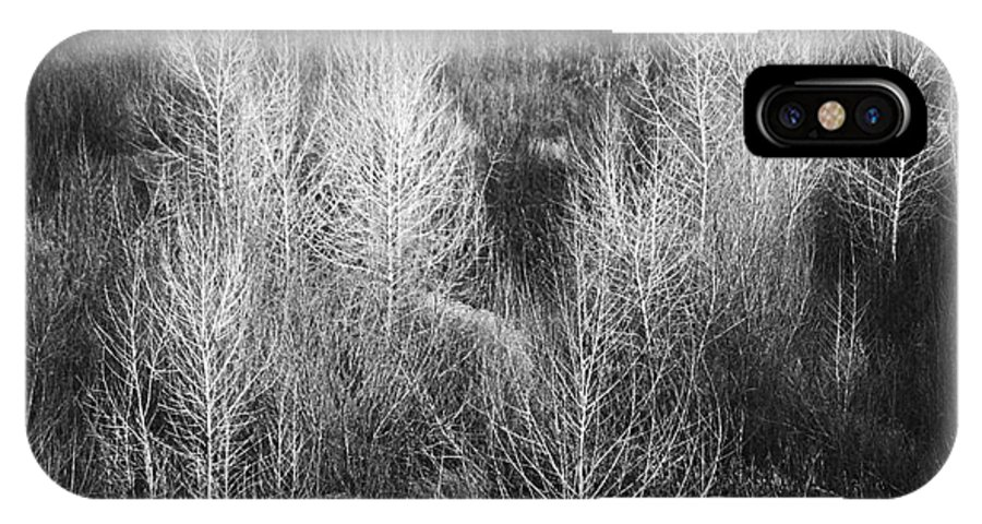 Roena King IPhone X Case featuring the photograph Winter Trees B And W 1 by Roena King