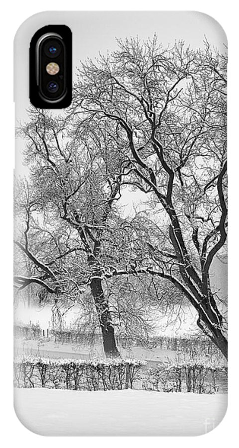 Winter IPhone X Case featuring the photograph Winter Trees by Brothers Beerens