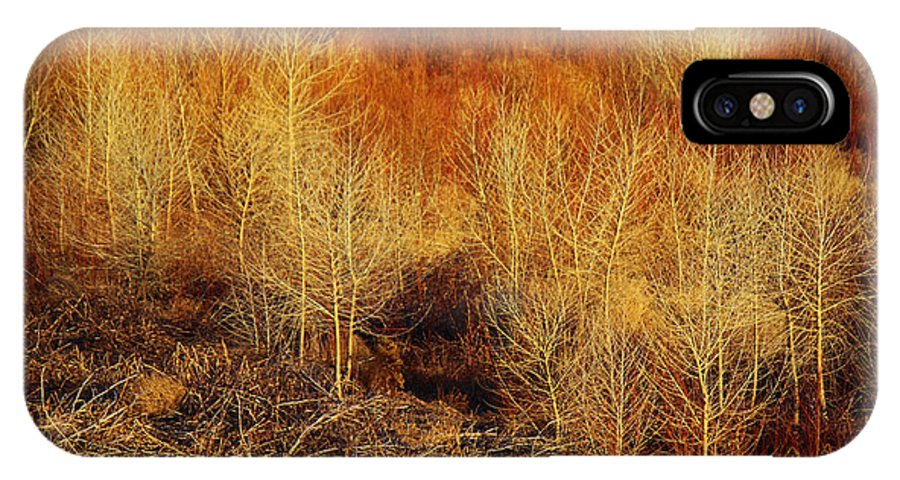 Roena King IPhone X Case featuring the photograph Winter Trees Color 3 by Roena King