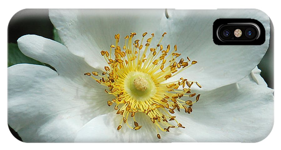 Floral IPhone X Case featuring the photograph Winter White by Suzanne Gaff