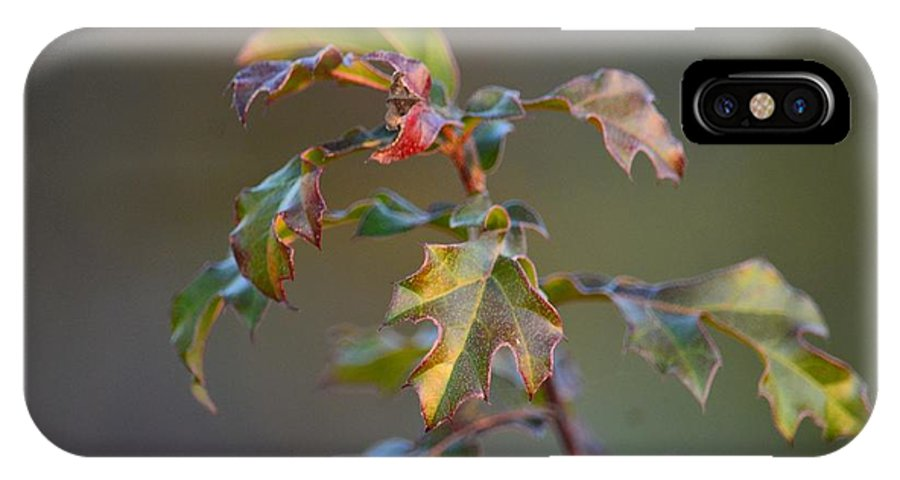 Winter's Oak Sapling IPhone X Case featuring the photograph Winter's Oak Sapling by Maria Urso