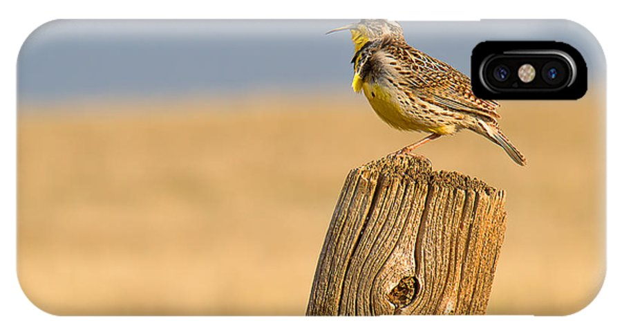 Meadowlark IPhone X Case featuring the photograph With A Song In My Heart by Jim Garrison