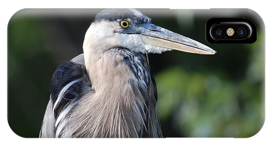 Blue Heron IPhone X Case featuring the photograph Witness To Jim's Folly by Jim Cook