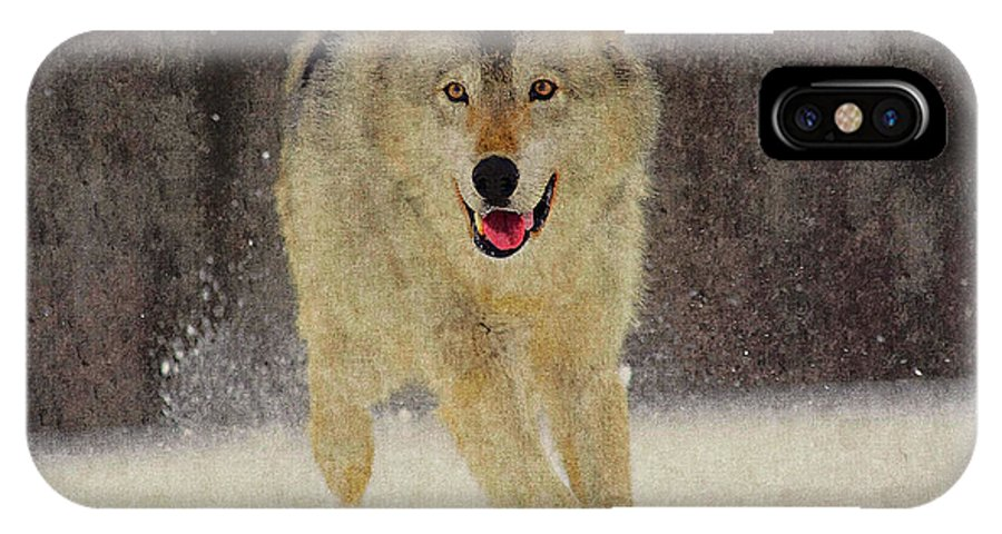 Wolf IPhone X Case featuring the photograph Wolf 1 by Ingrid Smith-Johnsen