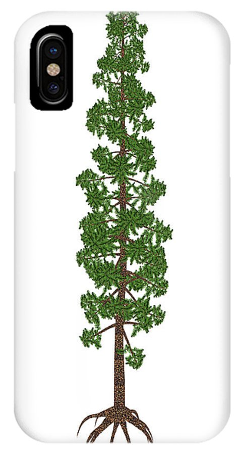 Tree IPhone X Case featuring the photograph Wollemia Nobilis Prehistoric Tree by Elena Duvernay