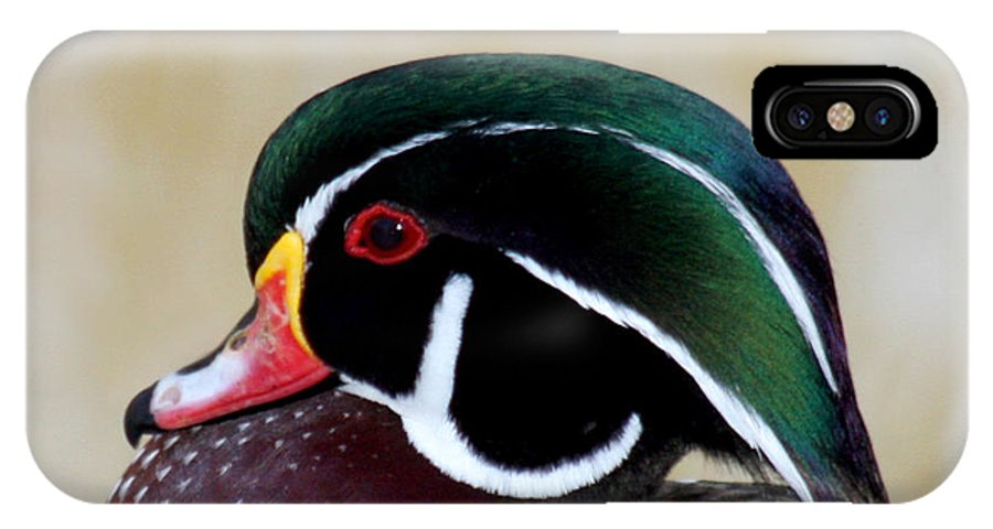 Wood Duck IPhone X Case featuring the photograph Wood Duck 1 by Bob and Jan Shriner