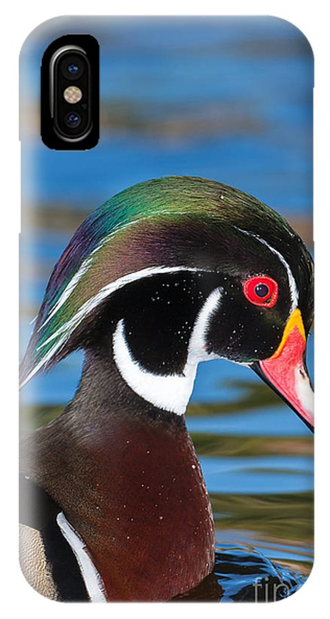 Clarence Holmes IPhone X Case featuring the photograph Wood Duck IIi by Clarence Holmes