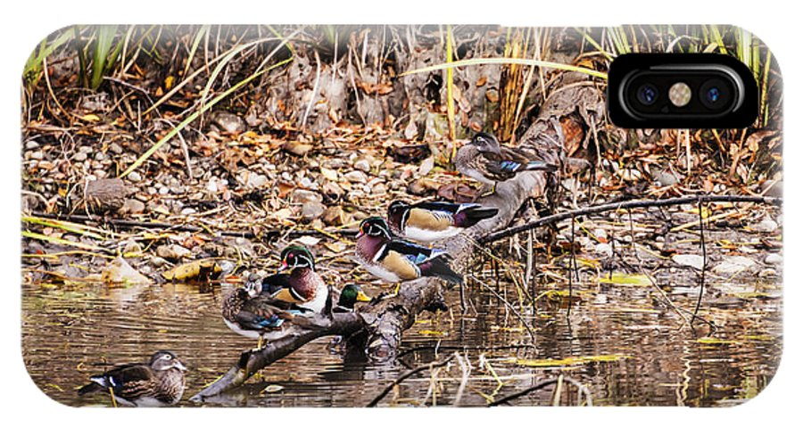 Wood Duck IPhone X / XS Case featuring the photograph Wood Ducks by Vishwanath Bhat