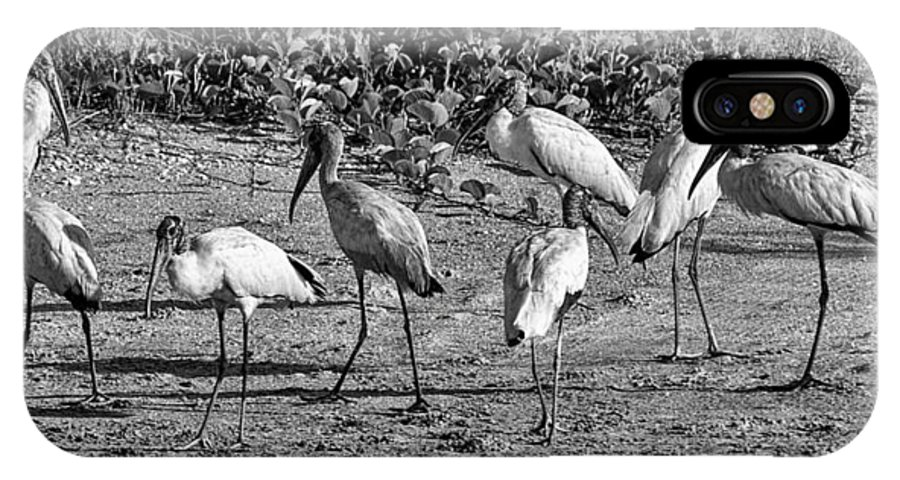 Wildlife IPhone X Case featuring the photograph Wood Storks In Black And White by Christina Manassa