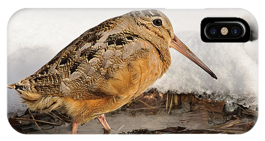 Woodcock IPhone X Case featuring the photograph Woodcock In Winter by Timothy Flanigan