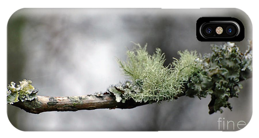 Tree IPhone X Case featuring the photograph Woodland Moss by Francine Hall