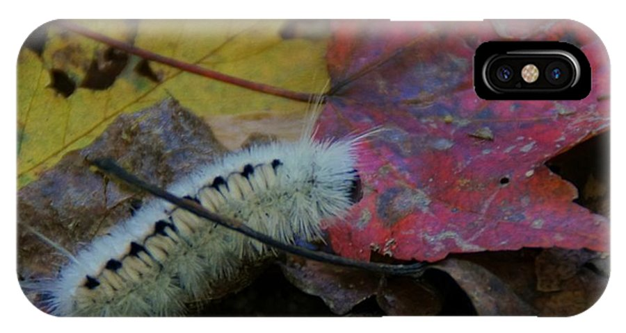 Caterpillar IPhone X Case featuring the photograph Wooly by Doug Hubbard