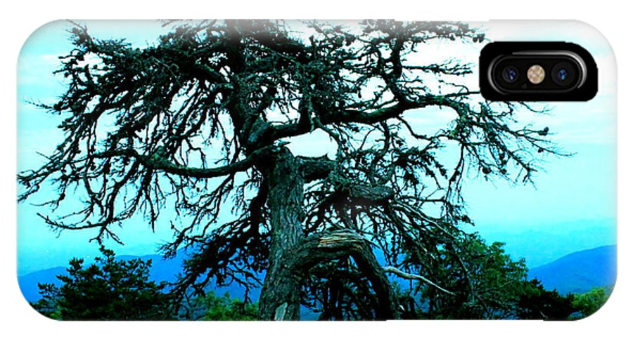 Dying Pine Tree IPhone X / XS Case featuring the photograph Work Of Art by Mary Koval