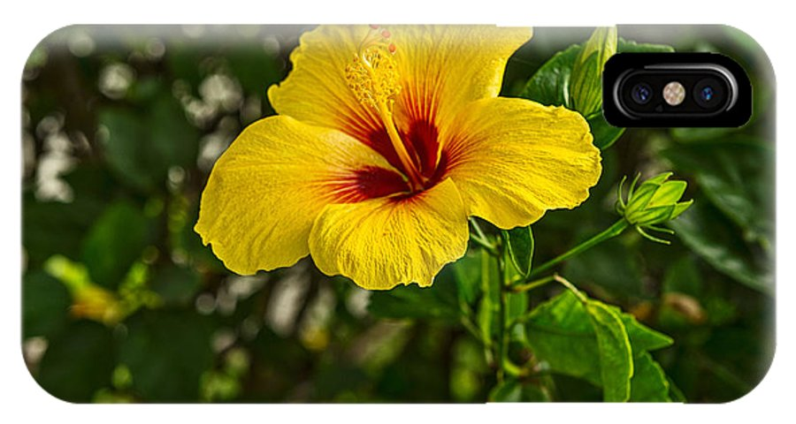 Hibiscus IPhone X Case featuring the photograph Yellow - Beautiful Hibiscus Flowers In Bloom On The Island Of Maui. by Jamie Pham