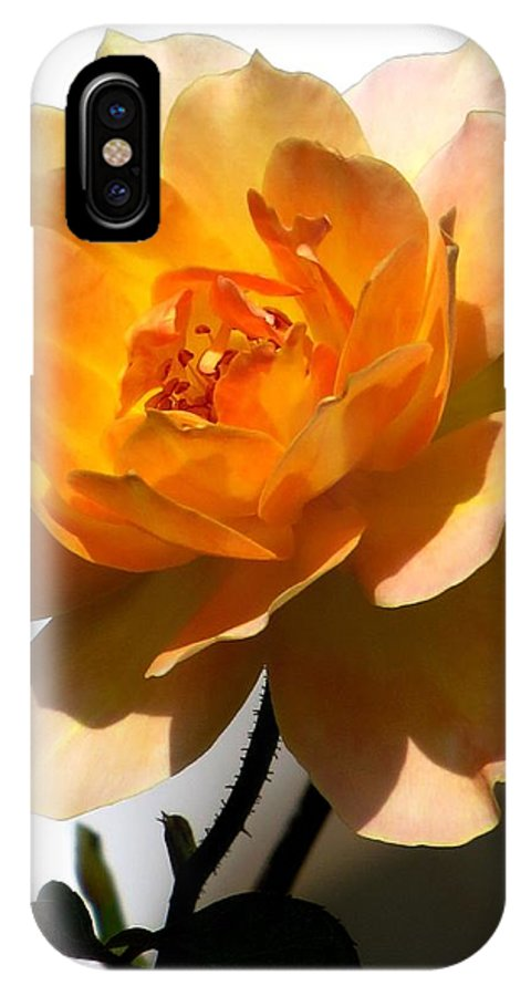 Rose IPhone X Case featuring the photograph Yellow And White Rose by Zina Stromberg