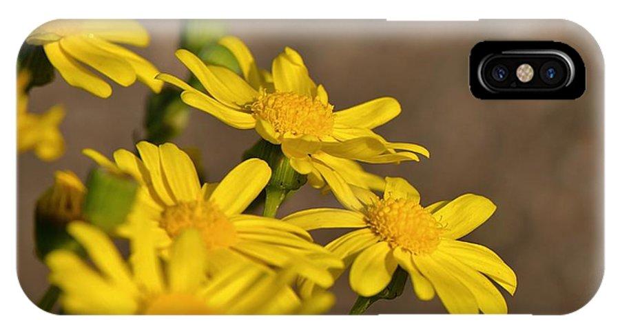 Flowers IPhone X Case featuring the photograph Yellow Arfaj Flowers by Sanath Ramesh