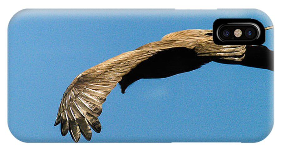 Africa IPhone X Case featuring the photograph Yellow Billed Kite 3 by Alistair Lyne
