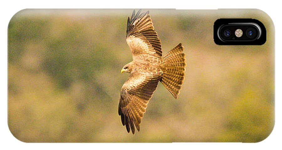 Africa IPhone X Case featuring the photograph Yellow Billed Kite 7 by Alistair Lyne
