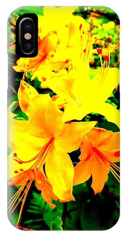 Flowers IPhone X Case featuring the photograph Yellow Bliss by Dancingfire Brenda Morrell
