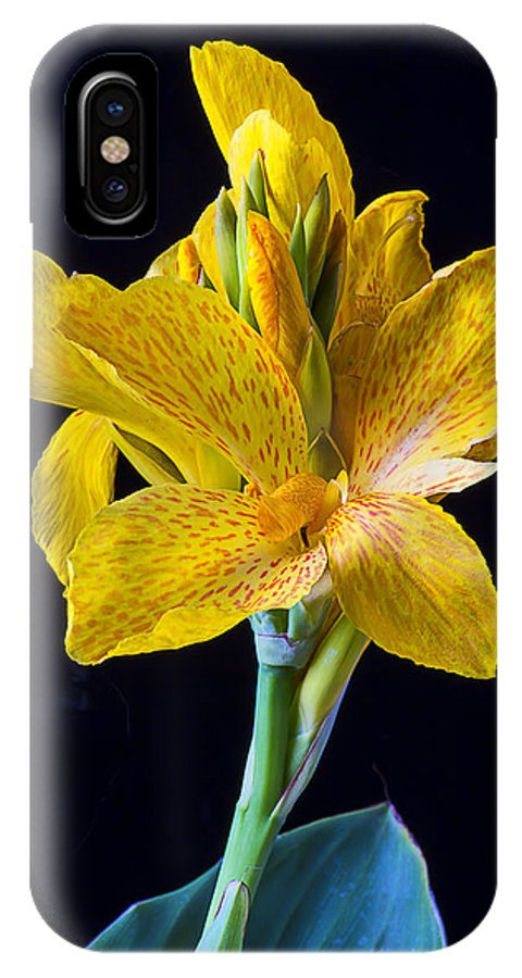Yellow Canna Flower IPhone X Case featuring the photograph Yellow Canna Flower by Garry Gay