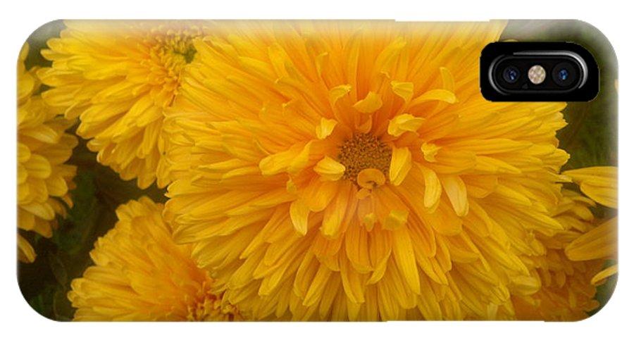 Chrysanthemum IPhone X Case featuring the photograph Yellow Chrysanthemums by Stefan Silvestru